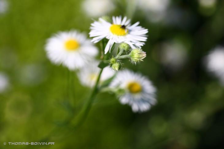 les-jardins-dangelique-by-tboivin-13.jpg