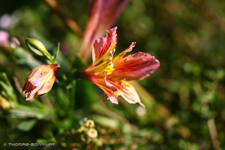 les-jardins-dangelique-by-tboivin-19.jpg