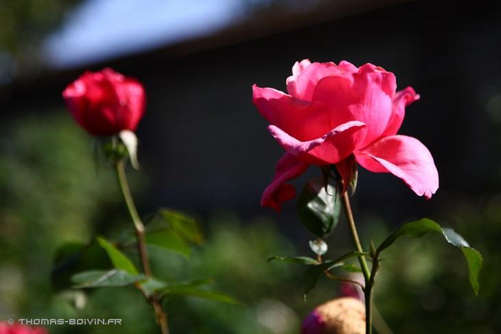 les-jardins-dangelique-by-tboivin-28.jpg