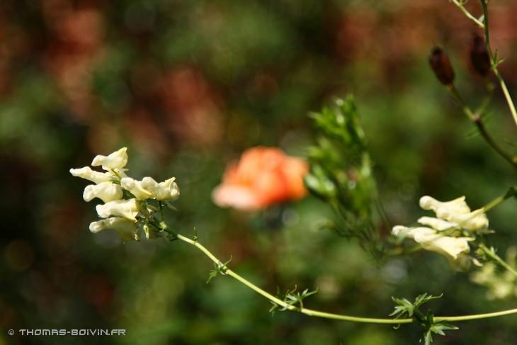 les-jardins-dangelique-by-tboivin-30.jpg