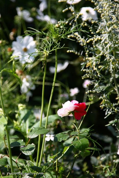 les-jardins-dangelique-by-tboivin-35.jpg