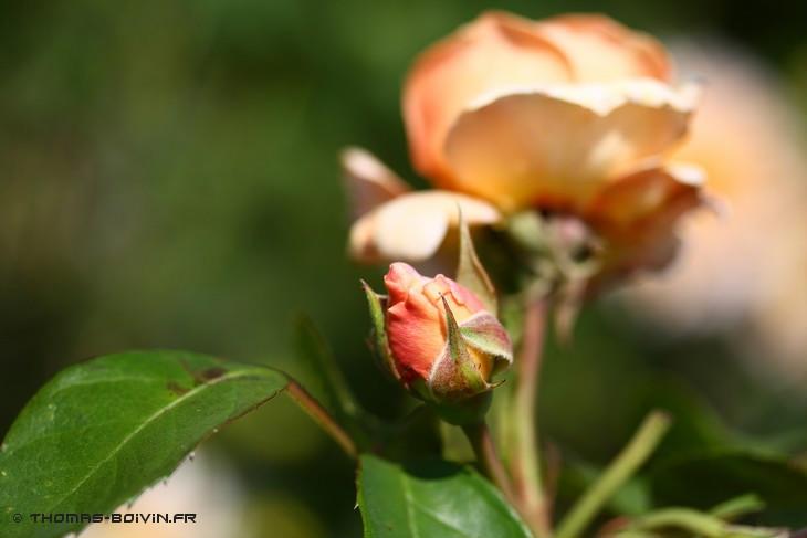 les-jardins-dangelique-by-tboivin-38.jpg