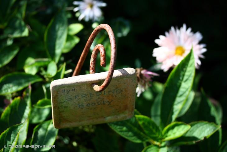 les-jardins-dangelique-by-tboivin-41.jpg