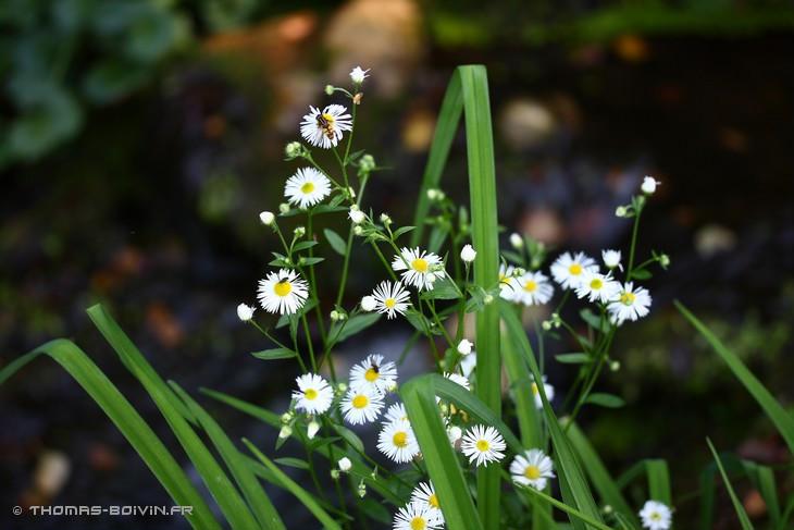 les-jardins-dangelique-by-tboivin-49.jpg