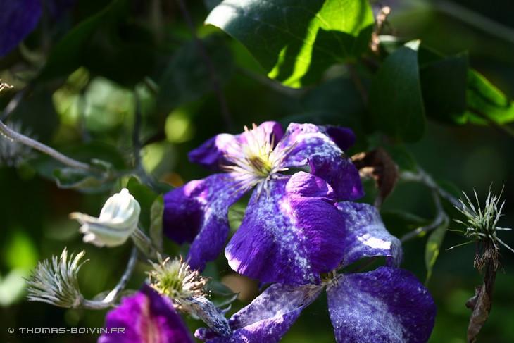 les-jardins-dangelique-by-tboivin-54.jpg