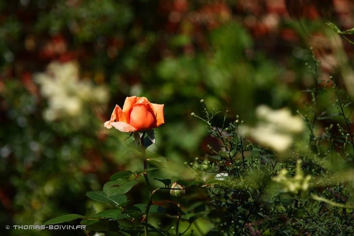 les-jardins-dangelique-by-tboivin-8.jpg