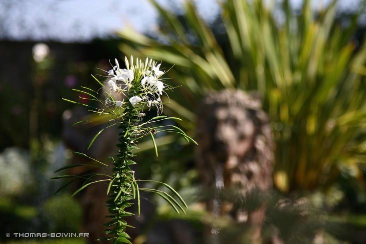 les-jardins-dangelique-by-tboivin-9.jpg