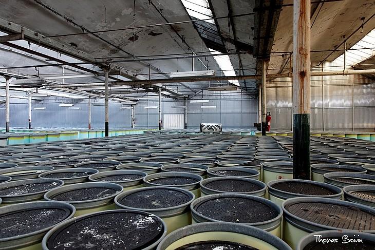 usine b5 (7)